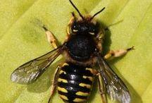 Bees/Bijen
