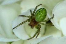 Spider/spin