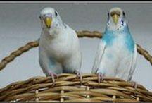 PAphotografy 2 - Birdwatching / Birdwatching e Bicos - penas