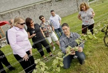 Events at the Winery / There is always so much going on at Sannino Bella Vita Winery Tasting Room.