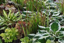Japanese garden, plants and ideas
