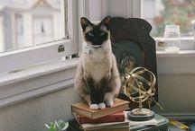 Felines / by Castlefield Bridal Company & Branding Atelier by Sophie Taylor