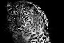 Photography:Animals