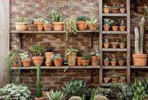 Tiny Home Garden