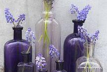 Purple Perfection / Rugs &  Interiors