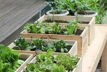 Jardins, terrasses & balcons