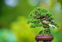 Bonsai the art of a small nature / love the small, enjoy the big