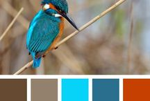 Color Palettes Animals