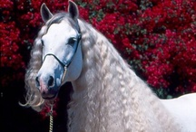 Elegant Equines / by Organic Beauty