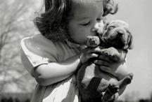Animals c: