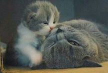 Katzen / Süss