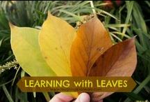 Nature Learning Activities / Great examples of educational activities that incorporate nature and encourage learning outside.
