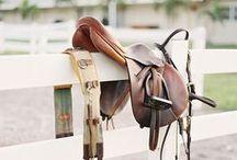 Equines & stuff