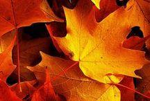 Autumn / Autumnal inspiration