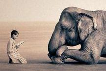 Animales maravillosos ! / by Lorena Torres
