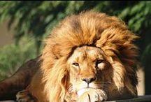 Vahşi Doğaya Yolculuk / Darıca Faruk Yalçın Hayvanat Bahçesi ve Botanik Parkı