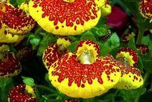 Narozeninová květina ...