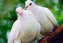 The Supportive Dove / Dedicated to the Supportive S DISC style represented by the doves in Taking Flight!