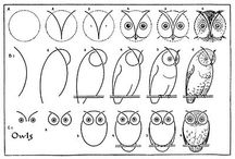 How to draw birds / Draw the four types of birds (eagles, parrots, doves & owls) from the fable Taking Flight!