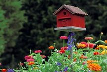 Birdhouses / Helping birds to Take Flight from your friends at Take Flight Learning.
