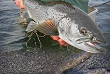 Meerforellen angeln | Seatrout fishing / Angeln auf Meerforellen | Fishing for seatrout