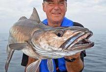 Meeresangeln | Sea fishing / Angeln auf Dorsch, Plattfisch & Co. | Fishing for cod, flatfish and others species