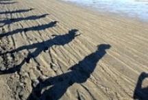 Kustmarathon 7 oktober 2012 / Samen met 3500 mede wandelaars de afstand van 42 km en een paar honderd meter afleggen in het mooie Zeeuwse landschap!