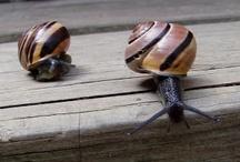 ...Snail... / Slimy sweetness!