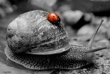 Little Ladybug / Ladybird... Ladybug... sweet little lady~