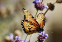 Delicate wings~