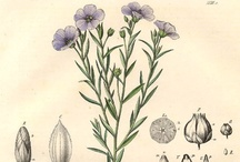 Vintage Linen & Blue Flax / The most beautiful blue flower... the most beautiful material~