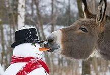 A snow friend~