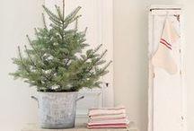 Oh Christmas tree~