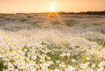 Meadow breezes~ / Rolling fields of flowers, meadows~