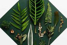 P.S.- Lean Mean Green Machine...