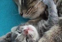 P.S.- Smitten Kittens