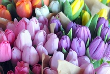 Tulipans / Flowers