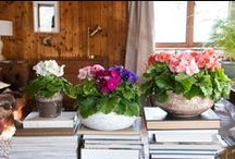Primula Touch Me / Primula obconica Touch Me, sparkling colours and without primine so non-allergic, brings the spring into your house!!! http://www.primula-touchme.com