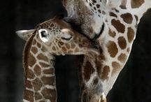 Animal love / by sandra hawley