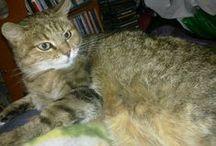 Tikru the Cat