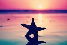 sea, sand and dreams