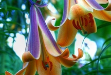 Nature et Fleures