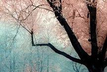 Kleuren, bloemen, prints / kleurcombinaties, prints, bloemen