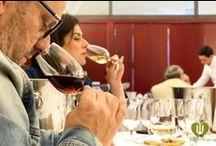 Concurso Internacional del Vino Ecologico en Montilla / Vino Ecologico