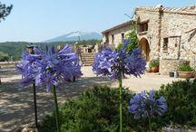 Can Lluís Cistella Spain / Turisme Rural - Holiday homes - Appartments - B&B