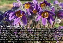 spring-blooming perennials / by Nebraska Statewide Arboretum