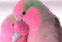 Birds. / Cute and beautiful