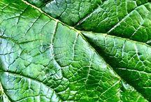 40 Shades Of Green / 40shadesofgreen #lovenature.