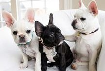 animals / love my Frenchie Richard and of course all cats and dogs
