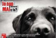 CLASSE 5E 2015-16 - 2^ SIMULAZIONE PROVA D'ESAME / Esercitazione tipo prova di esame grafica e teorica: campagna sociale contro l'abbandono degli animali. Prova per Esame di Stato già svolta nell'esame di stato del 2013.